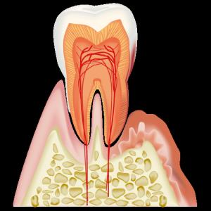 real-teeth006
